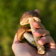 Die besten Tipps für die Pilzsuche Pilze sammeln - aber richtig!
