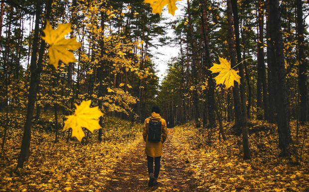 Die TOP 10 der Herbstwanderwege in Vorarlberg!