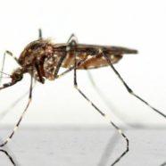 Schluss mit Mückenstichen – das hilft wirklich! Die besten Tipps gegen Mückenstiche!