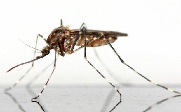 Schluss mit Mückenstichen – das hilft wirklich!