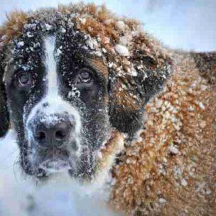 So schützt ihr euer Haustier im Winter! Die besten Tipps bei Frost und Kälte!
