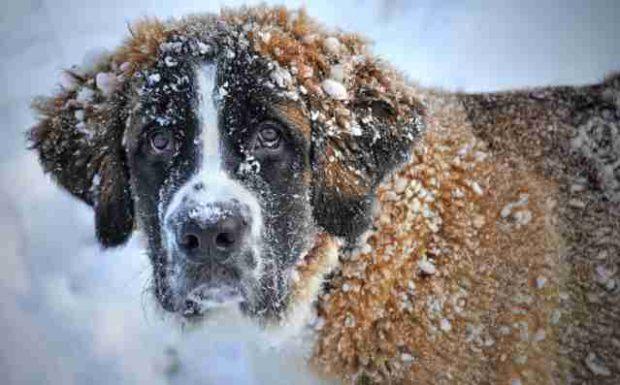 So schützen Sie Ihr Haustier im Winter!
