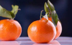 Mandarine, Clementine, Satsuma… der Zitrusfrüchte-Check! Worin unterscheiden sich die Mandarinensorten?