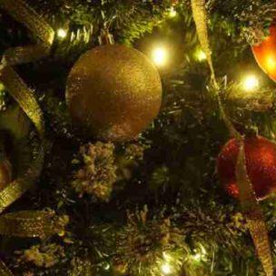 So bleibt euer Tannenbaum lange frisch! Die besten Pflegetipps für den Weihnachtsbaum!