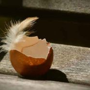 So nützlich sind Eierschalen! Die besten Recycling-Tipps!