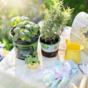 Die wichtigsten Gartenarbeiten im März! Das könnt ihr jetzt schon tun!
