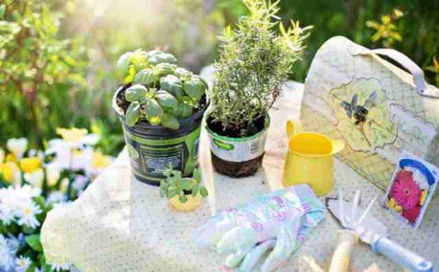 Die wichtigsten Gartenarbeiten im März!