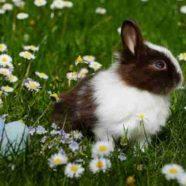 Ei, Ei, Ei: die besten Verstecke zu Ostern! So wird die Ostereiersuche zum Hit!