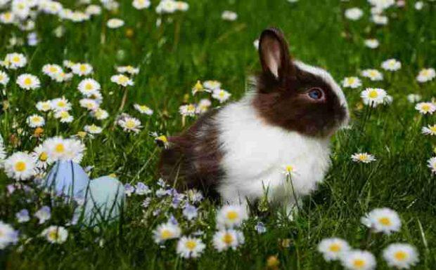 Ei, Ei, Ei: die besten Verstecke zu Ostern!