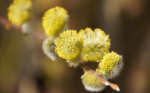 Wenn Pollen zur Qual werden!