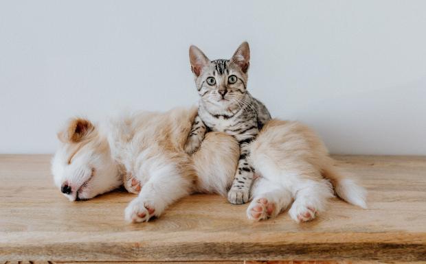 So findet ihr das richtige Haustier für euer Kind!