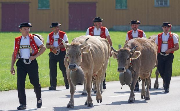 Die TOP 10 der beliebtesten Alpabtriebe in Vorarlberg!