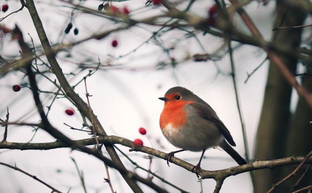 Vögel im Winter richtig füttern – so geht's!