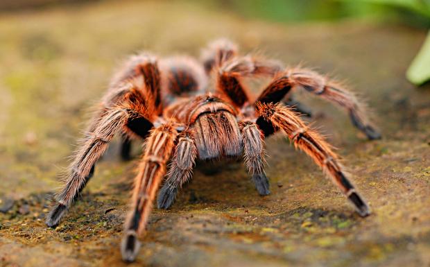 Angst vor Spinnen?