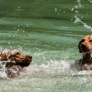 Die TOP 10 der beste Hunde-Badeplätze in Vorarlberg!