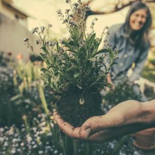 Hallo Frühling! Mit diesen Apps bringt ihr Euren Garten auf Vordermann.