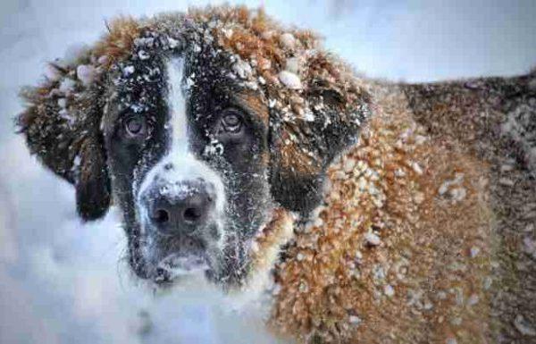 So schützt ihr euer Haustier im Winter!